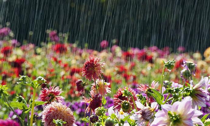 Пороен дожд и грмежи во северниот дел од земјата  попладне стабилизација на времето