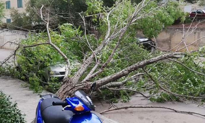 Оркански ветрови во Хрватска корнат дрвја и носат покриви