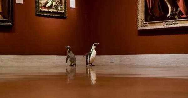 Пингвини во посета на музеј