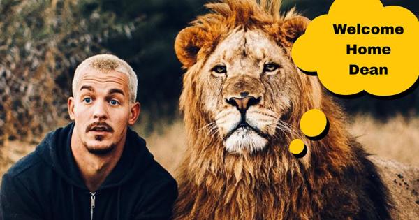 Дин по 2 месеца се враќа кај лавовите - добредојде или?